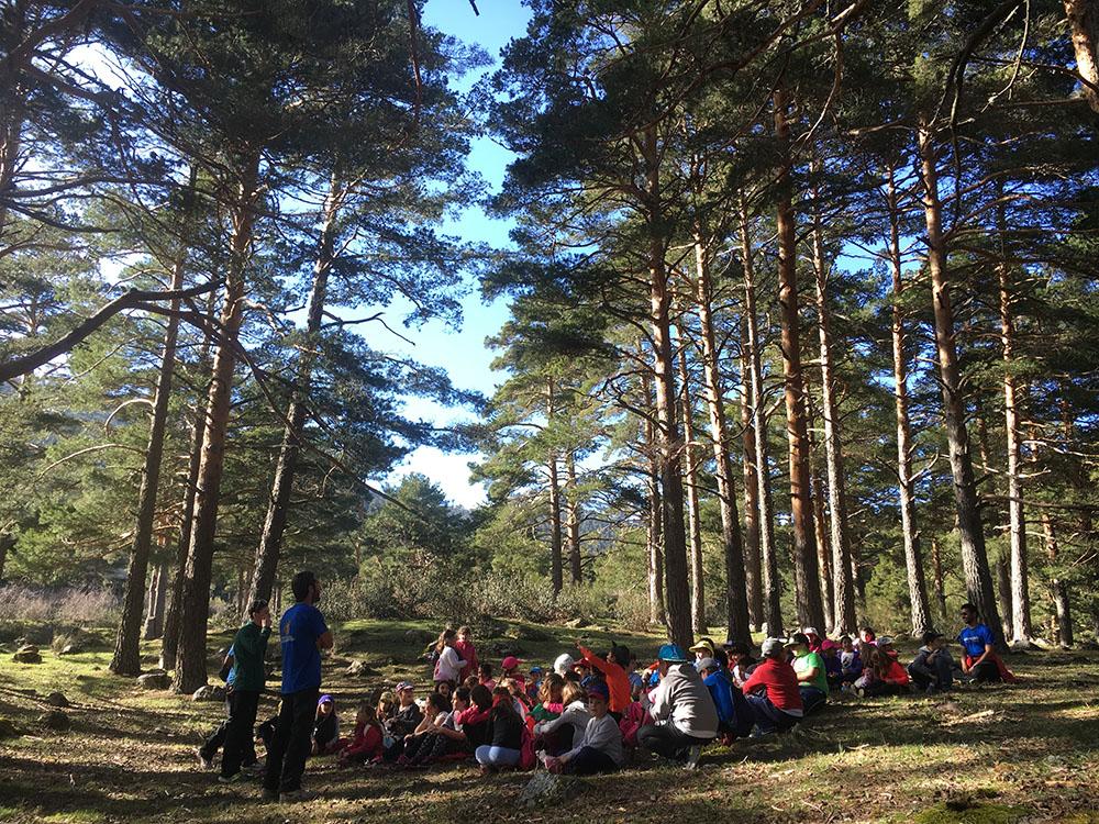 Excursión bosque campamento